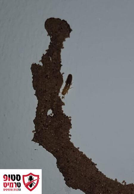 טרמיטים בקיר